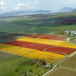 Scenic Flight Tours in Skagit Valley Tulip Festival.